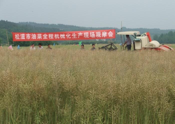 油菜机械化收割现场会在洈水镇金坪村召开