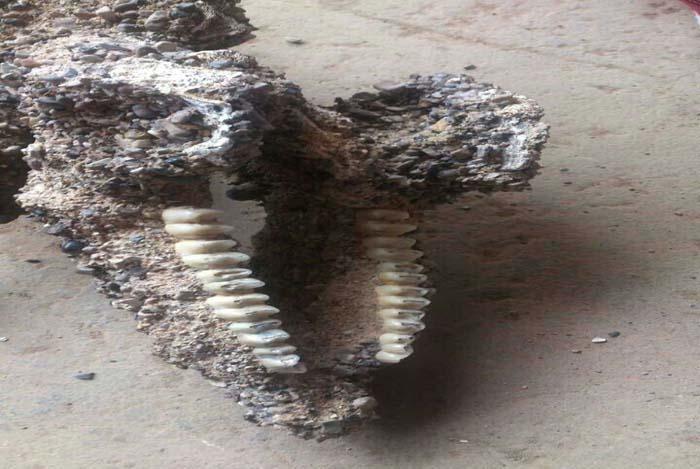 我市首次发现陆生食草类脊椎动物化石